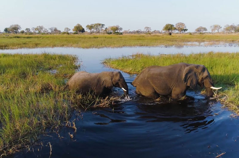 elephants walking across a river on a Botswana luxury safari