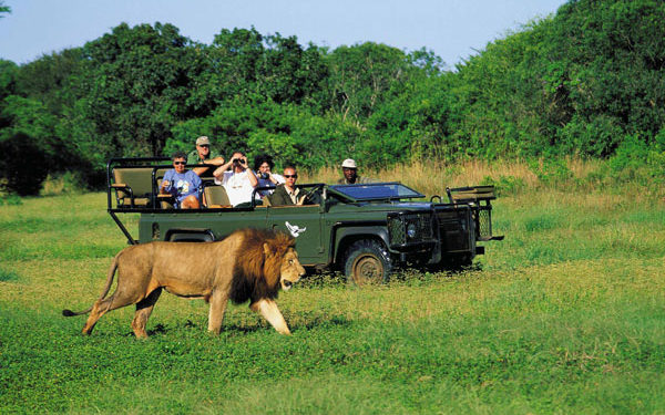 seeing a lion on a Londolozi safari
