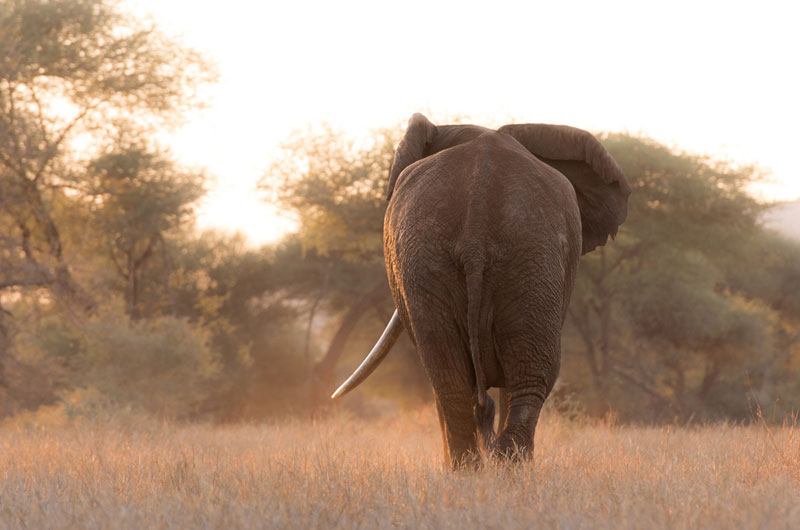 Guide to African safari costs told by elephants