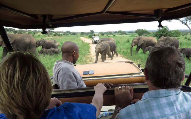 what to do in Botswana when elephants block the road