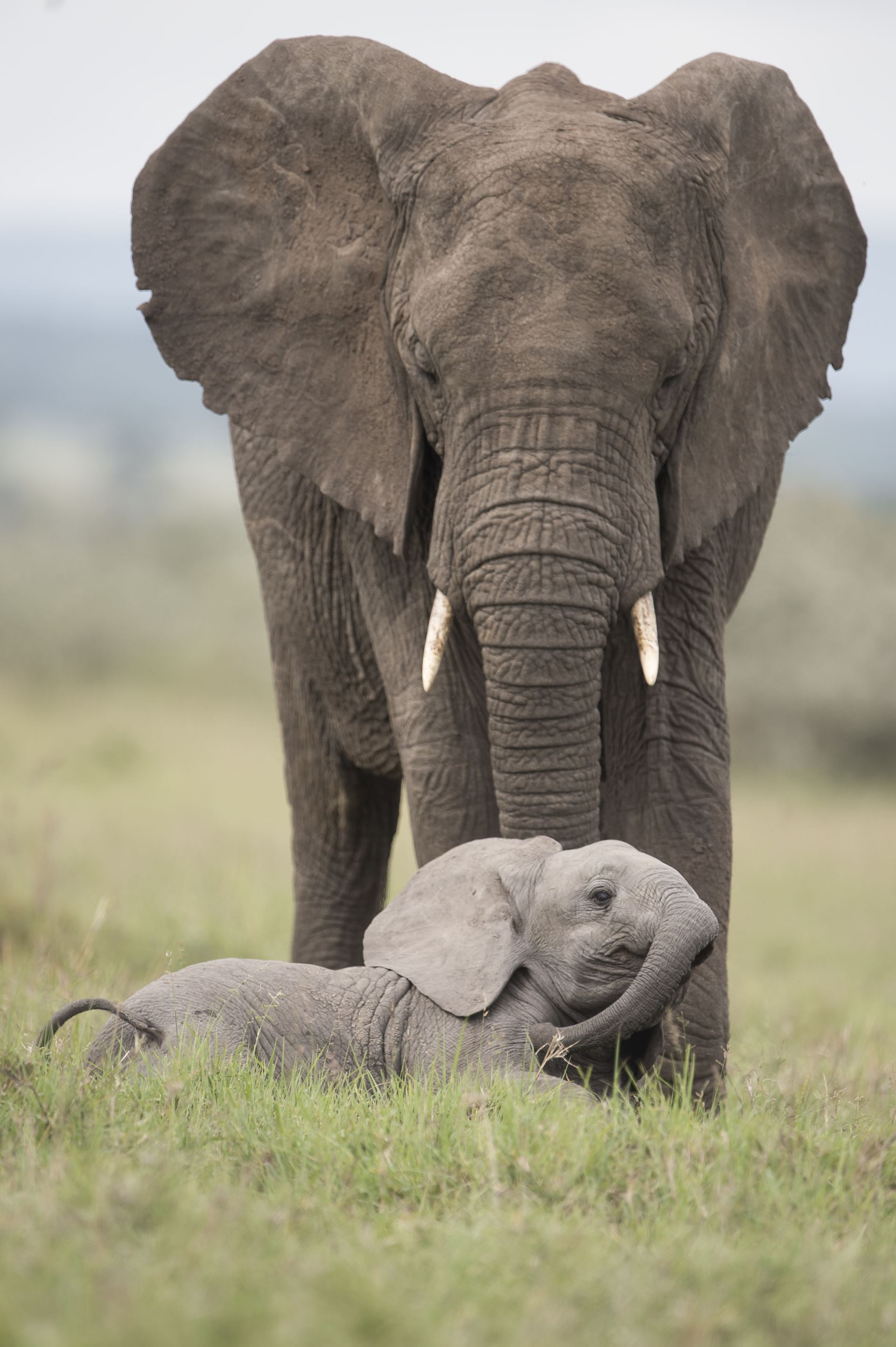 spotting elephants on the best family safari in Africa