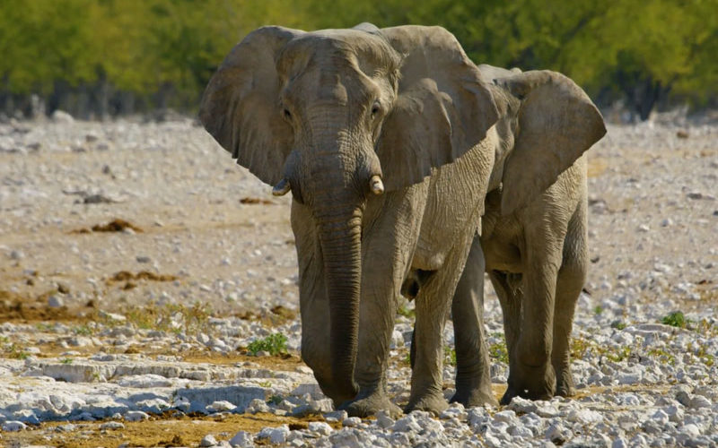 where to safari in Africa to see elephants like these