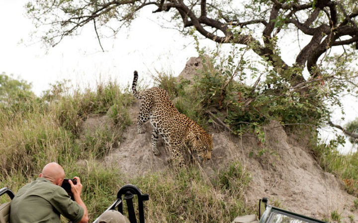 seeing a leopard is part of what to do in South Africa