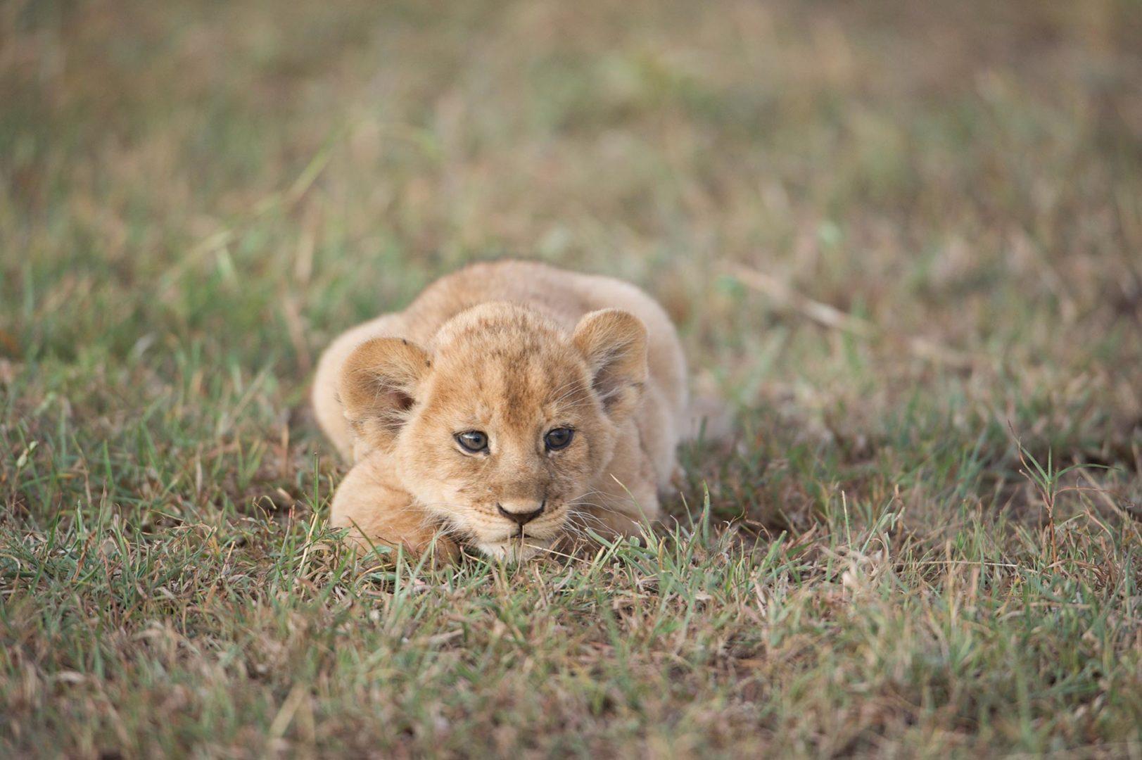 Safari is on my bucket-list