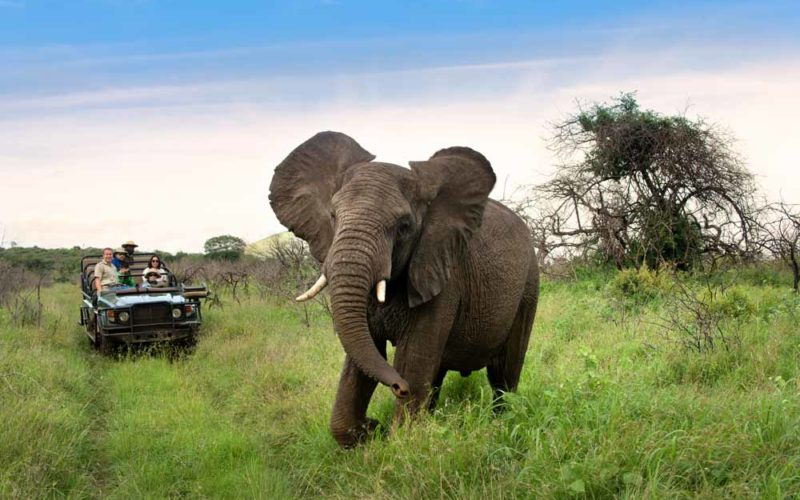 seeing an elephant on safari in Phinda