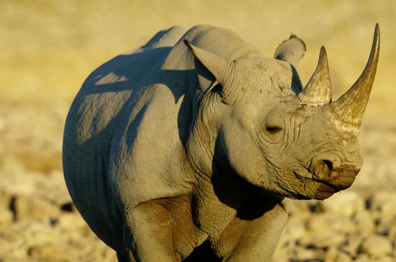 seeing a rhino on a Namibia safari