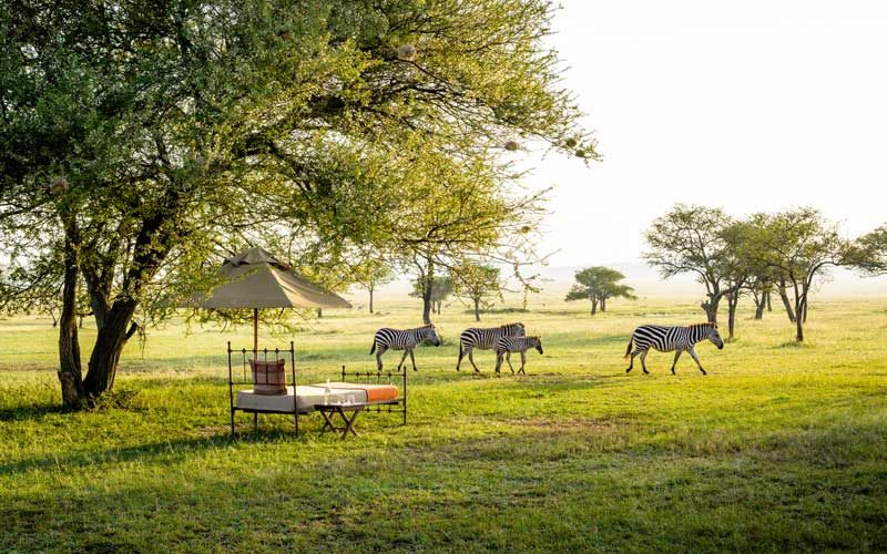 zebra seen from a tent bed on the best luxury private African safaris