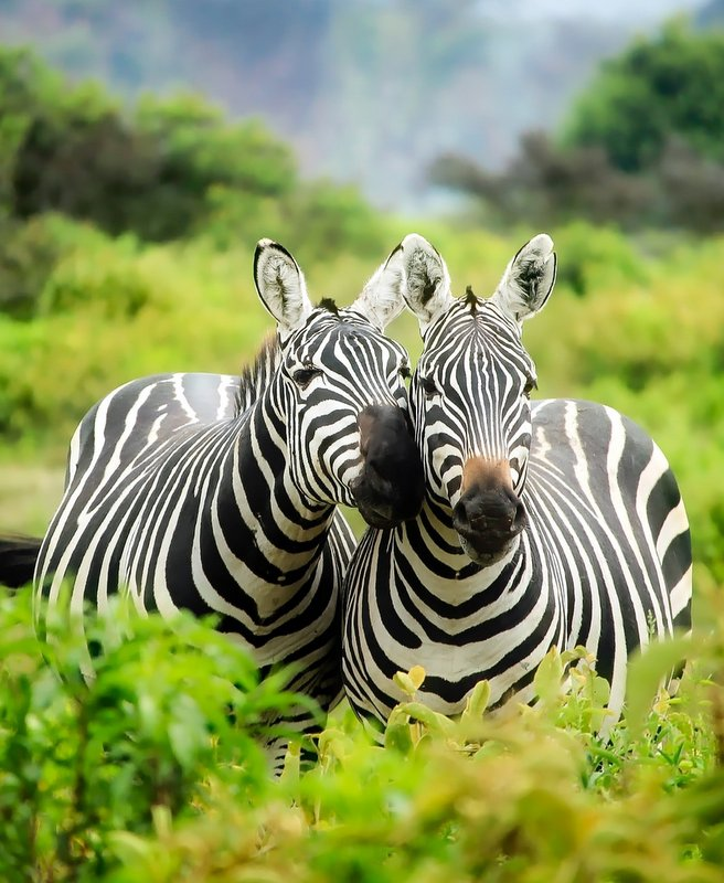 "Do You Want a Private Safari?<br><span style=""color:#ed9200""><i>(Read More)</i></span>"