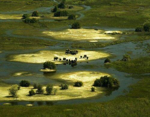 BOTSWANA-Duba-Wildlife