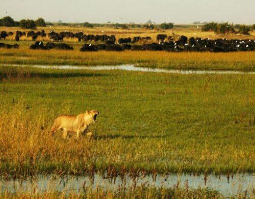 BOTSWANA-Duba-Wildlife4