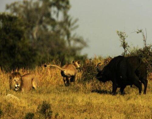BOTSWANA-Duba-Wildlife5