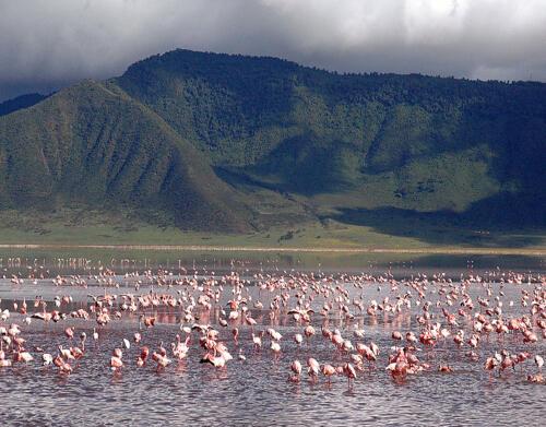 Ngorongoro Flamingo Lake1