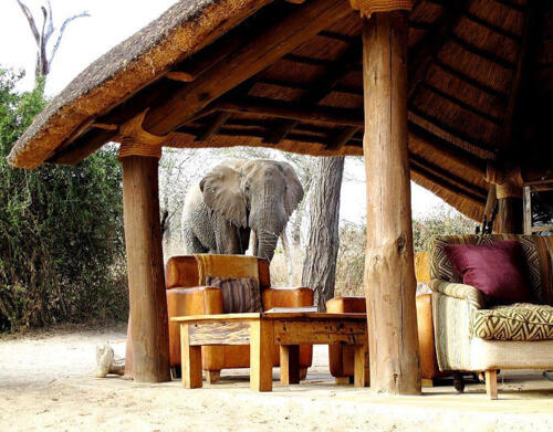 olivers-Elephant-Olivers-Camp-LR