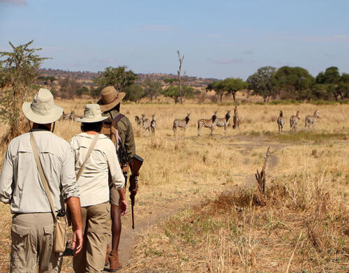 olivers-Zebra-Tarangire-national-park-walking-safari-Lewis-Mangaba-Quinton-Miller-HR