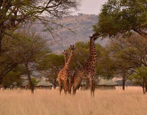 One-Nature-Serengeti-2-511x400