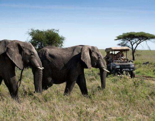 One-Nature-Serengeti-7-511x400