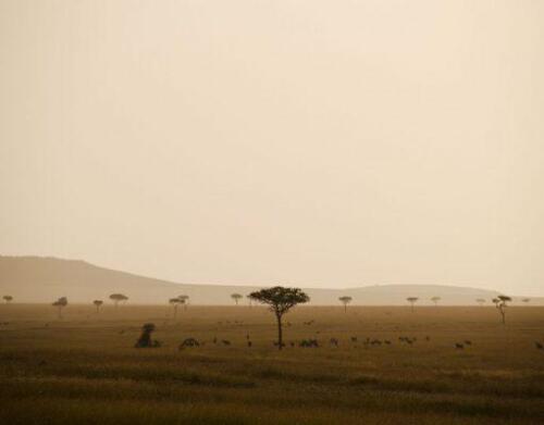 serengeti-safaris-4