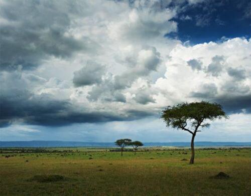 serengeti-safaris-singita