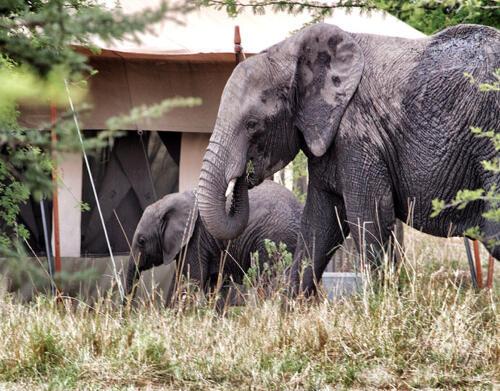SERIAN-Serengeti3