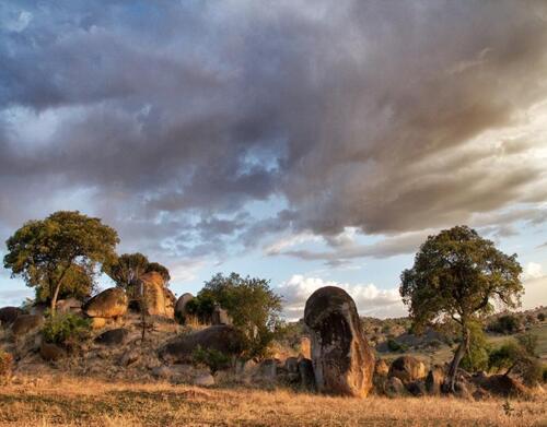 serian-serengeti-north9