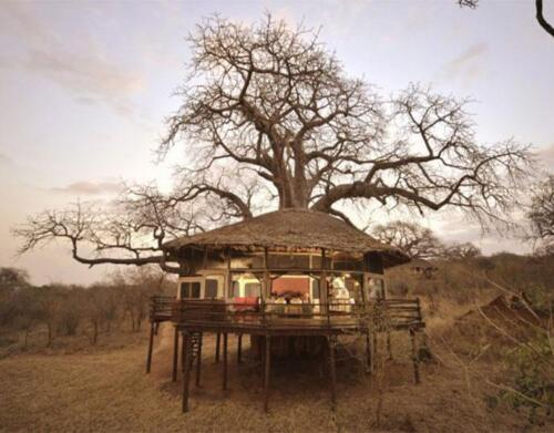 Tarangire-Treetops-51