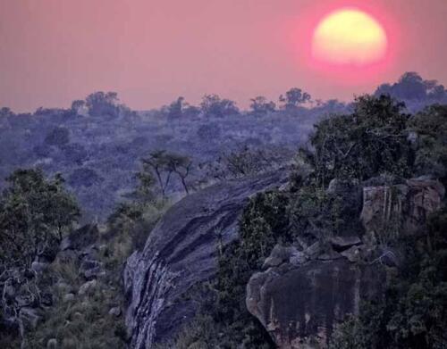 tarangire-treetops-landscape (1)
