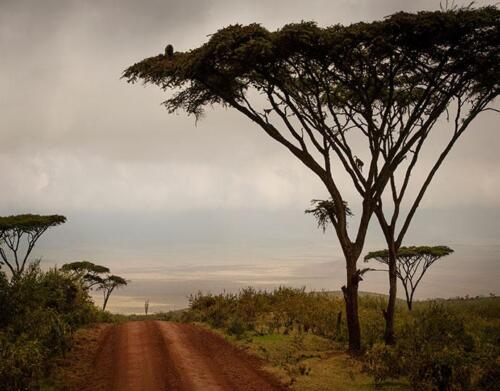 ngorongoro-highlands2